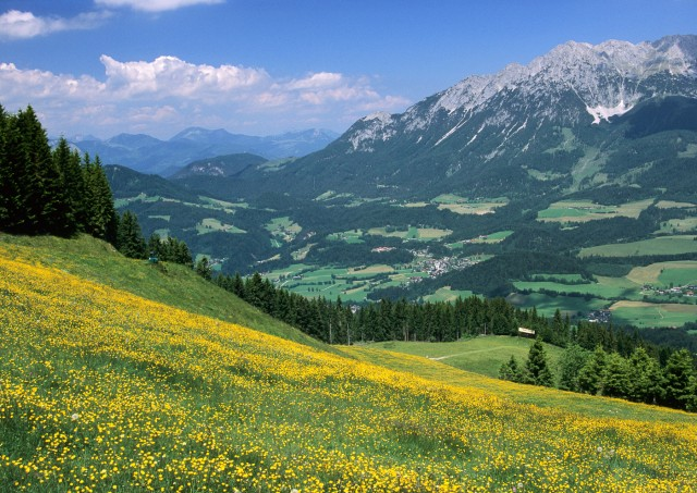 Alpine meadow, Austria
