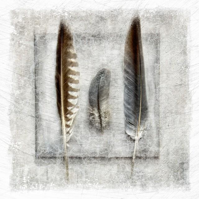 Three Feathers