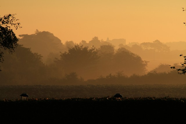 Misty sunrise over St Andrews