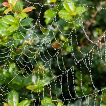 Spider's web by Alaistair Ramsay