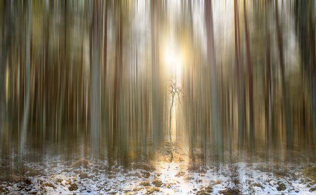 Abernethy Forrest Light Chris Reekie
