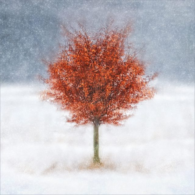 001 Beech Tree in Winter