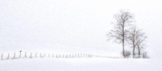 05_Snow Fence.jpg