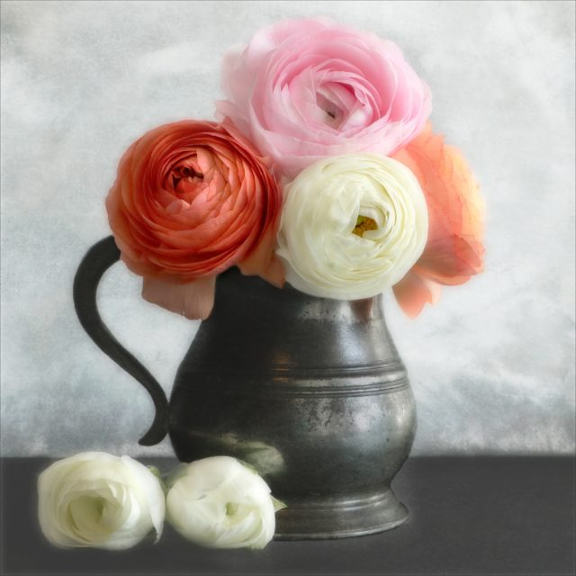 Ranunculus and Pewter