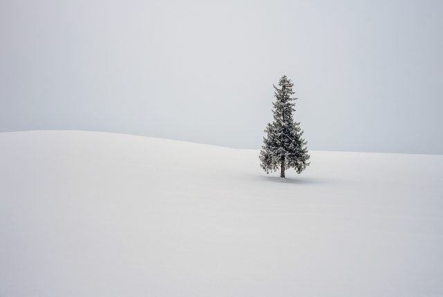 Lone Christmas Tree by Philip Graham