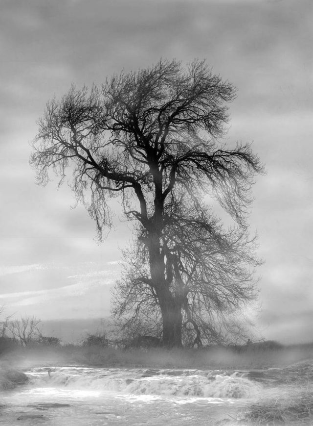 Misty-Tree-Joan-Riddell