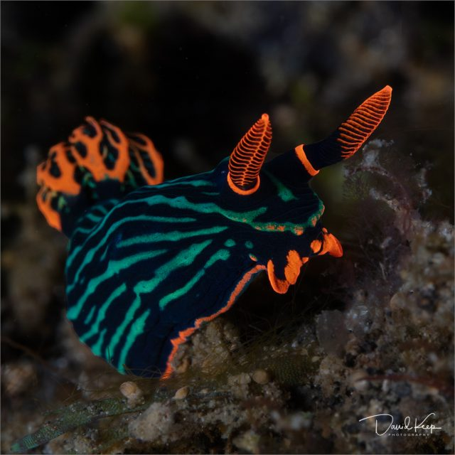 Nudibranch4of13